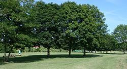 Park (Generic)